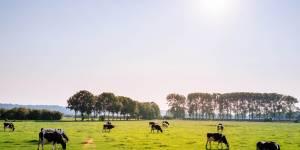 Proyecto: AnMBR para el tratamiento de efluentes lácteos:  Escalado y evaluación de planta piloto in-situ